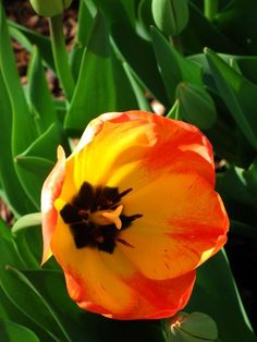 Yellow and Orange Flower   By Kristine Euler
