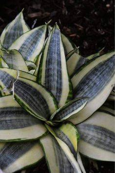 The fascinating family history about creating this plant.