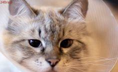 Confira dicas para cuidar do animal após uma cirurgia