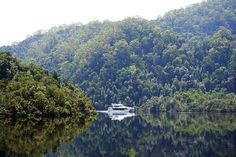 Book your tickets online for Gordon River Cruises, Strahan: See 916 reviews, articles, and 422 photos of Gordon River Cruises, ranked No.3 on TripAdvisor among 15 attractions in Strahan. Tickets Online, Tasmania, Cruises, 2 In, Need To Know, Trip Advisor, Articles, River, Book