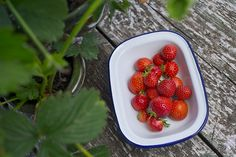 Fresh strawberries from the garden. Find out how to grow your own juicy strawberries with our step-by-step guide. Strawberry Plants, Grow Your Own, Step Guide, Strawberries, Make It Simple, Fresh, Garden, Easy, Recipes