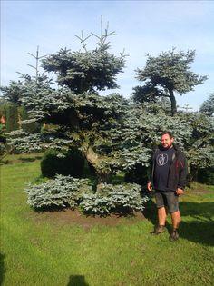 Bonsai Park, Garden Center, ogród, tree, japanese, drzewa, krzewy, rośliny, orientalne, niwaki, juniperus, pinus, acer, carpinus, centrum ogrodnicze, bonsaipark.pl