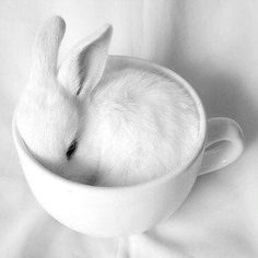White, I know its weird, but I think this pic is so artsy because the hardness of the cup contrasts with how soft and delicate the little bunny is! opposites attract and complement.
