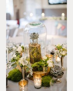 White tablecloth, cloche with succulent resting on tree branch surrounded by clumps of moss ~ we ❤ this! moncheribridals.com