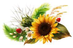 Sunflower Cards, Sunflower Pictures, Watercolor Sunflower, Watercolor Flowers, Flower Images, Flower Art, Flower Boarders, Molduras Vintage, Very Beautiful Flowers