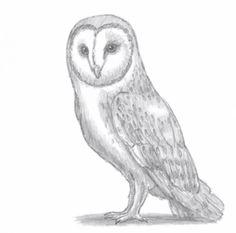 jagdflugzeug einfach zeichnen, 351 best zeichnen | malen images on pinterest in 2018 | animal pics, Design ideen