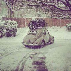 Volkswagen New Beetle, Vw T1, Retro Cars, Vintage Cars, Van Vw, Scenery Background, Vintage Porsche, Epic Photos, Beautiful Bugs