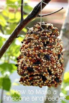 How to make a bird feeds with bird seed and peanut butter | Peanut Butter and Seeds Bird Feeder