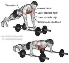 """Bodyweight fly (aka rollout fly). Can be either an isolation exercise or a compound exercise. Learn why by visiting site and reading the """"Comments and tips"""". Target muscle: Lower Pectoralis Major. Synergistic muscles: Upper Pectoralis Major, Anterior Delt https://www.musclesaurus.com/"""