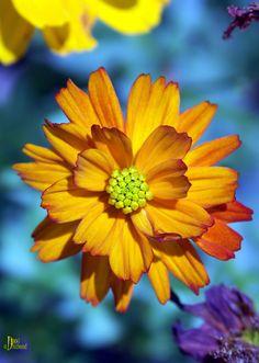 sunshine on a stem