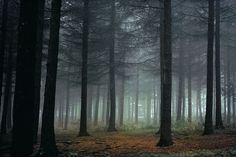 The Spruce Plot at The Morton Arboretum, Lisle, IL. Lovely, still. A favorite place.