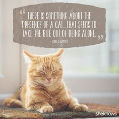50 Cat Quotes That Only Feline Lovers Would Understand 50 Cat quotes that perfectly explain your love for kitties Cat Love Quotes, Quotes About Cats, Funny Cat Quotes, Pet Quotes Cat, Cute Cats, Funny Cats, Puppy Care, Cat People, Animal Quotes