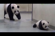 Panda Finds Her Baby Out Of Bed, What She Does Next Has Us Smiling Ear To Ear