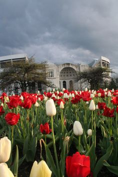 Ohio Stadium: I don't think there is a more beautiful place!!