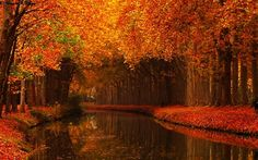 """Sometimes it comes down to being in the right place at the right time . and having excellent equipment, technique, and composition as in Haris Khan's """"Romantic Autumn Scene around Canal Du Midi"""" Love Canal, Facebook Background, Events Uk, Canal Du Midi, Autumn Lake, Autumn Scenes, Peaceful Places, Rocky Mountains, Planting Flowers"""