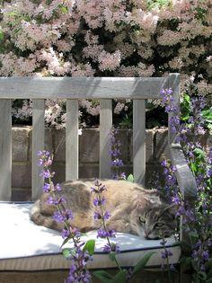 Spring cat.