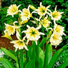 Pretty Flowers, Fresh Flowers, Flying Duck Orchid, Summer Plants, Gods Creation, Horticulture, Daffodils, Gardening Tips, Planting Flowers