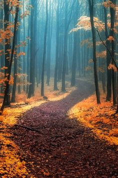 Se surpreendam com esses caminhos... 28 caminhos mágicos que parecem saídos de contos de fada