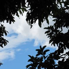 Céu azul | Blue