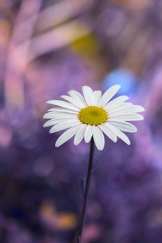 a flower by Enzo Davide Photography