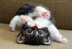 Breakdance kitten.