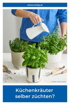 Frische Kräuter in deiner Küche. Ob Salat, Smoothies oder Pesto: Kräuter geben dem Gericht den Frischekick! Mit diesen Tipps & Tricks gelingt die Kräuterzucht zu Hause.
