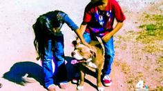 California Officer Shoots Himself Trying to Kill Pit Bull | The Dogington Post