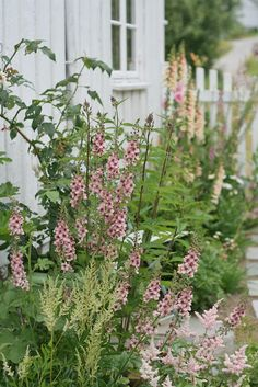 Verbascums, astilbe and foxgloves in a cottage garden.Love these pale colors.