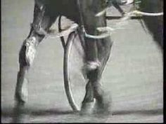 USTA Presents The Difference Between a Trotter and Pacer
