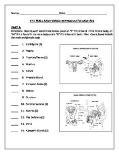 Printables Female Reproductive System Worksheet student the ojays and body systems on pinterest human growth development male female reproductive quiz