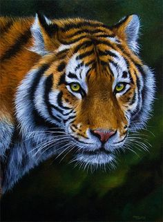 AMAZING tiger portrait by Jason Morgan...how beautiful.