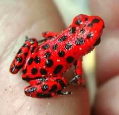 Well Red: 10 Amazing Red Animals                                                                                                                                                                                 Mais