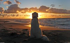 sunsets on the beach - Saferbrowser Yahoo Image Search Results