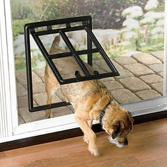 doggie door! attaches to the existing screen door. perfect for sadie when it's nice out and we're not home!
