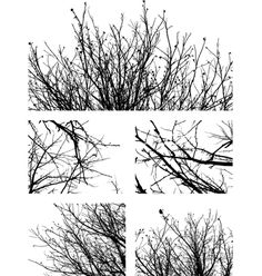 Silhouettes of branches vector on VectorStock®