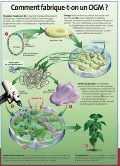 Comment fabrique-t-on un OGM ? - Par Sciences et Avenir