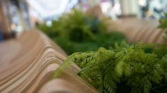 CONTOUR   parametrica Parsley, Celery, Herbs, Vegetables, Bench, Food, Veggies, Herb, Vegetable Recipes