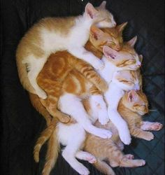 Extreme catnapping!