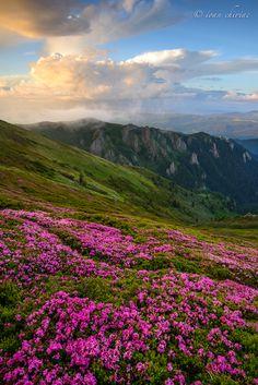 Mountains Ciucas, Nature, Landscape