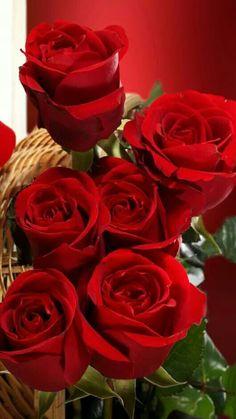 For my Sleeping 😴 Beauty. Wallpaper Nature Flowers, Flowers Nature, Flower Wallpaper, Beautiful Rose Flowers, Beautiful Flower Arrangements, Fresh Flowers, Red Rose Bouquet, Blue Aesthetic Pastel, Rose Pictures