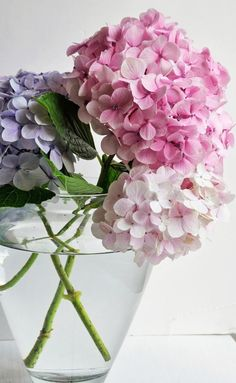 marcelajumac Seasons Of Life, Four Seasons, Spring Time, Hydrangea, Blossoms, Beautiful Flowers, Hydrangeas, Flowers, Florals
