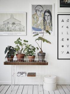 Pot yo plants.