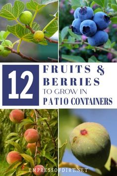 The best fruit trees and berries for containers include plants growing on dwarf rootstock. See the list of recommended plants and use the care tips to grow food on your patio or balcony.