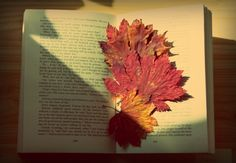 breakfast recipe: take 4 red crispy leaves and your favourite book. Add 5 tablespoons of gratitude and a sweet gentle sunbeam. Season it with serenity and coziness. Serve with joy and peace of mind.