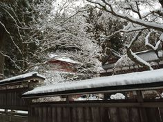 It is snowing in Niiko