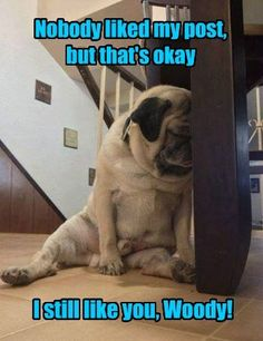 Pugly Click The Link for watching more funny and cute pug puppies video. Pugly Click The Link for watching more funny and cute pug puppies video. Pug Meme, Funny Dog Memes, Funny Animal Memes, Funny Animal Pictures, Funny Dogs, Funny Animals, Cute Animals, Pug Pictures, Dog Photos