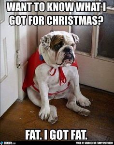 Want to know what I got for Christmas? (Funny Animal Pictures) - #christmas #fat