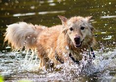 7 tips for exercising your dog in hot weather