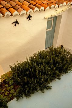 Quintal (backyard) Casa na Aldeia - Albernôa, Alentejo - Portugal.