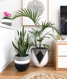 Plant Stand ideas to Fill Your Living Room With Greenery You Will Love It . Plant Stand id Painted Plant Pots, Painted Flower Pots, Eco Deco, Decoration Plante, Concrete Crafts, House Plants Decor, Deco Floral, Diy Home Crafts, Potted Plants